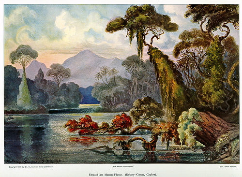 Illustration- Haeckel's Jungle River, Ceylon